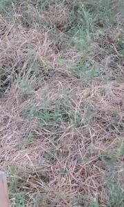 20160929_101021-grass-up-close
