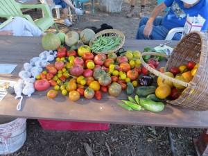 late-sept-2016-harvest
