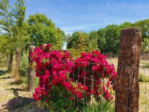 roses.resized.pg
