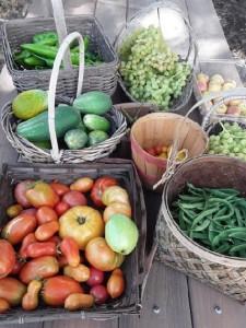 VCG harvest.8.11.21