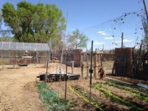 garden_beds3