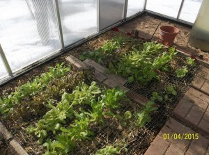 in_greenhouse1