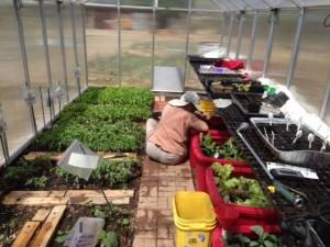 working_greenhouse